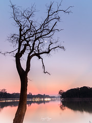 Angkor Wat at dusk (longtnguyen) Tags: cambodia travel sunset dusk trees water lake temples angkorwat siemreap bluehour