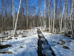 Honkalanranta | Hämeenlinna, Finland (Mtj-Art - Thanks for over 2 million views :)) Tags: hämeenlinna honkalanranta talvi winter kevät pitkospuut laavu nuotiopaikka luonnosuojelualue markuskauppinen huawei matkapuhelinvalokuvaus smartphonephotography sunny aurinkoista nature luonto luontokuva valokuvia valokuviahämeenlinnasta