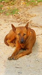 2019-02-12_16-54-28_ILCE-6500_DSC04930_DxO (miguel.discart) Tags: 181mm 2019 animal animalphotography animals animalsupclose animaux chiangmai chiangrai chien createdbydxo dog dogs dxo e18135mmf3556oss editedphoto focallength181mm focallengthin35mmformat181mm holiday ilce6500 iso160 nature naturephotography pet sony sonyilce6500 sonyilce6500e18135mmf3556oss thailand thailande travel vacances voyage