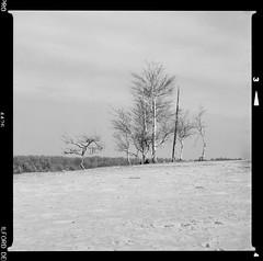 Bronica SQ-A-059-002 (michal kusz) Tags: pustynia kozłowska bronica sqa zenzanon 80mm ilford delta 400 ilfosol 3 desert poland tree sand bw blackandwhite film frame format squere sq heathers