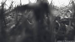 DJI_0379-2 (JHP Photographies) Tags: france aquitaine nouvelleaquitaine dordogne portsaintefoy paysfoyen colline hill moulin coucherdesoleil sunset drone mavic mavicpro dji djimavicpro campagne champs fields paysage landscape ciel sky hiver winter lune moon leverdelune moonrise saintefoylagrande nature