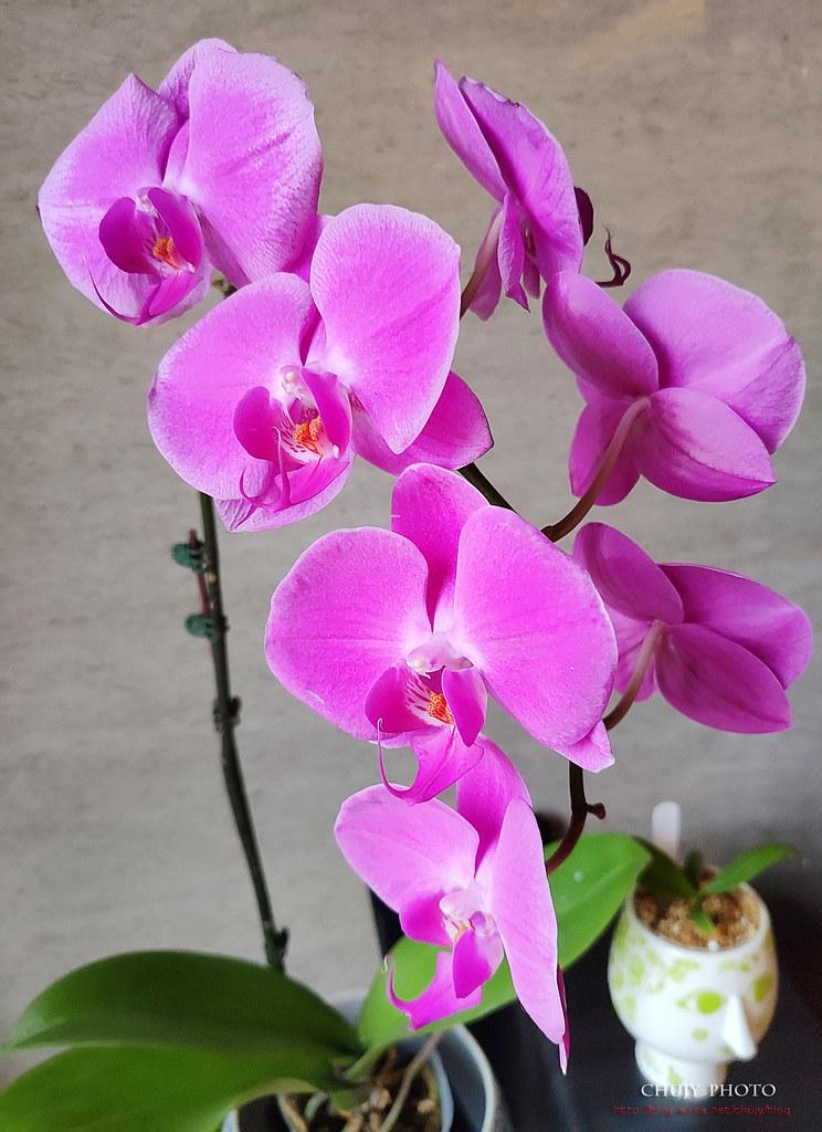 (chujy) 搶不到又讓人混怒的香醇小米9 (5/11新增幻彩紫) - 56