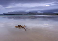 Beal Bán Beack, Co Kerry (irishman67) Tags: beach kerry cokerry bealbánbeach sunrise autumn wildatlanticway seaweed mountain hills atlanticocean