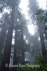 Redwoods National Park (104) (Framemaker 2014) Tags: redwoods national park orick california northern pacific ocean coast highway united states america