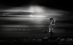 Pollard_Willow_Bay_bw (George Nevrela) Tags: bay tree driedtree ocean panorama bw sw schwarzweiss blackandwhite shadesofgraynight bucht meer pelikan baum wellen kopfweide willow pollardwillow salix wasserreflexion reflections sunset sunrays sonnenuntergang nevrela georgenevrela fineart