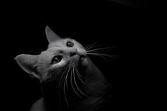 O jato (carlosdeteis.foto) Tags: carlosdeteis galiza galicia cats gatos jatos blackandwhite blancoynegro brancoenegro