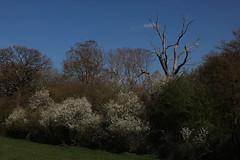 brill walk-190401-20.jpg (Phil Mercer-Kelly) Tags: sunshine spring radiooxford bbc counyryside blossom philmercer getactive brill sheep buckinghamshire europe england uk oxfordshire views bucks health windmill walker oakley walk