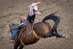 Calgary Stampede 2017 (tallhuskymike) Tags: calgary stampede event rodeo calgarystampede horse cowboy action alberta 2017 prorodeo outdoors greatestoutdoorshow