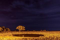 _RJS3150-Edit (rjsnyc2) Tags: 2019 africa d850 namibia night nikon outdoors photography remoteyear richardsilver richardsilverphoto safari sunset travel travelphotographer animal camping nature stars tent wildlife