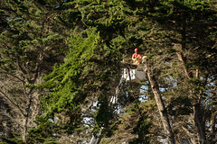 20190208_1355_7D2-105 TreeTech at work #1 (johnstewartnz) Tags: canon canonapsc eos apsc 7dmarkii 7d2 7d canon7dmarkii canoneos7dmkii canoneos7dmarkii 70200mm 70200 70200f28 70200mmharewood rawhitidomain 100canon treetech treefelling thomsonpark newbrighton newzealand