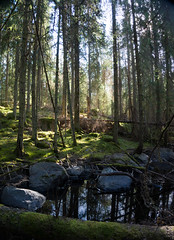Fiby forest I (Eklandet) Tags: nature sverige sweden samsung sky scandinavia nordic countries naturephotography landscape fineartphotography landscapephotography naturelover primeval forest foresttrees tree