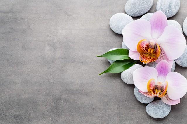 Обои камни, орхидея, pink, orchid картинки на рабочий стол, раздел цветы - скачать