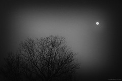Cold Silence (Claudio_R_1973) Tags: cold grainy noisy monochrome moon mistery landscape tree nature outdoor night mist horror minimal blackandwhite black white