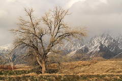Fremont Cottonwood (arbyreed) Tags: arbyreed tree cottonwood fremontcottonwood wintertree willardbay winter cold dam dike wasatchmountains clouds storm