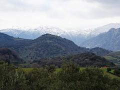Snow and greenery creates a wonderful view. (Ia Löfquist) Tags: mountain berg grönska greenery landscape landskap snow snö