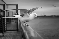 Trying to get the balance right (Juan Izquierdo) Tags: away alone beautiful birds canon camera dream finland god gold happy helsinki indie bw light love landscape memories magic misty photography sky sunset sea baltic travel yummy view fly
