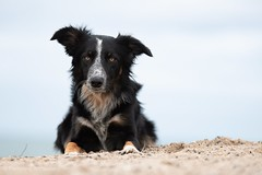 Frisbee (Flemming Andersen) Tags: water beach frisbee bordercollie dog