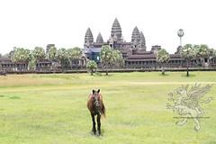 Angkor_AngKor Vat_2014_01