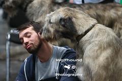 img_8800 (HoundPhotographer) Tags: irishwolfhound wolfhound hound crufts crufts2019 showdog dogshow
