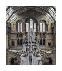 Bones (Illogical_images) Tags: illogicalimages bones whale sony a7r architecture history historicengland naturalhistorymuseum symmetry london loxia
