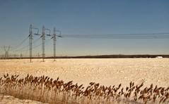 Filles électriques (Robert Saucier) Tags: amtrak plaine hiver neige winter snow pylones fils wires buissons bushes montérégie train paysage landscape ciel sky bleu blue img3498 adirondack