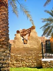 نوم العوافي (hamad1436r) Tags: الدرعية riyadh cat palm نخل قط