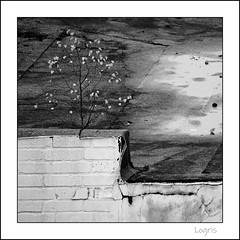 Alone on the roof / B&W (Logris) Tags: baum tree wall mauer roof dach nature sw w bw minimal