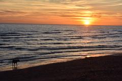 Brighton Sunset (joseph.e9) Tags: photography sunset beach dog autumn clouds brighton england united kingdom nature water sky light sun landscape orange