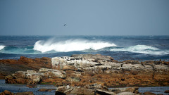 Cape Of Good Hope (jochenspieker) Tags: capeofgoodhope capepeninsula southafrica africa sel55210