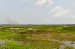 The swamps of Eastern Ghana