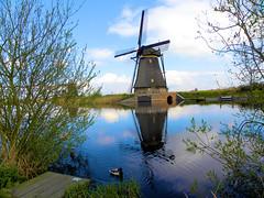 DSCN0875 (alainazer2) Tags: kinderdijk nederland paysbas holland hollande eau acqua water ciel cielo sky champs fields moulin mulino windmill animal