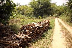 Firewood near Kakum National Park in Ghana (inyathi) Tags: westafrica ghana firewood kakumnationalpark africa
