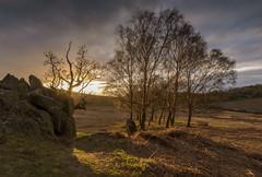 Crooked Tree Sunset (John__Hull) Tags: landscapes taking breath landscape spring sunset trees crooked oak clouds sky bracken ferns rocky outcrop sun leicestershire charnwood forest bradgate uk england nikon d7200 sigma 1020mm backlit