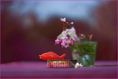 Inside and outside. Living outa box. (Gudzwi) Tags: fisch fish shallowdepthoffield knapperfokus unschärfe blur bokeh drausen garten garden outside box schachtel dose smileonsaturday stillleben stilllifephotography stilllife blüten blossom bloodplumtree daisy blutpflaume lebensmittel rost frühling frühlingsblumen vase tabletop ölsardinendose can foods rust spring flowers sardinetin zierjohannisbeere blutjohannisbeere ribessanguineum redfloweringcurrant currant südafrika southafrica plastikfisch spielzeug plasticfish toy