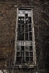 abandoned in Newark NJ (imbrojerry) Tags: abandoned newark nj nikon d750 vines window decay urban