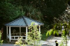 杉林溪森林遊樂區 (紅色小草) Tags: fujifilm400 nikonf3hp 28mmf20 2104