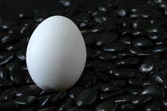 Egg on Black Rocks (arbyreed) Tags: arbyreed close closeup egg ei rock black blackrocks contrast explore