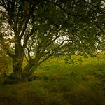 Green Tree thumbnail