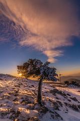 Sunset on the mountain (Vagelis Pikoulas) Tags: sun sunset mountains kithairwnas kithaironas greece europe december winter 2018 tokina 1628mm sunburst snow tree vilia canon 6d