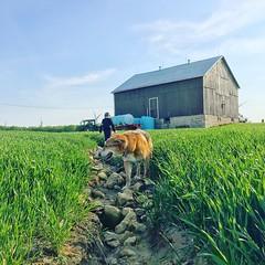Boy and his dog (jessalynn_sammons) Tags: iphone explore field barn farmboy farmkid farmdog dog