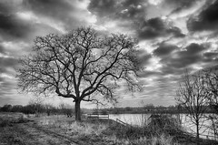 Nuttree B&W (metsemakers) Tags: tree blackwhite sony a7ii tamron buggenum