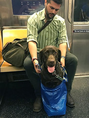 Dogs Are Not Allowed On NYC Subway Unless They're In A... (freewayzone) Tags: travel nature explore vaction trilifestyle fitness instagood motivation fit gym healthy health photooftheday workout training bodybuilding eatclean strong determination cardio fashion fitspo diet active healthychoices fitnessaddict exercise getfit train cleaneating fitnessmodinspiration love life quotes art like beautiful lifestyle follow success motivationalquotes inspire inspirationalquotes fitel instahealth