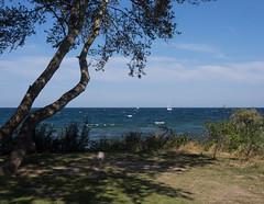 Blick auf die Ostsee (Teelicht) Tags: balticsea baum deutschland germany kühlungsborn küste meckpomm mecklenburgvorpommern meer ostsee coast sea tree