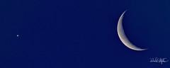 Moon And A Planet (dcstep) Tags: dsc3756dxo rockymountainarsenalnationalwildliferefuge nwr bison buffalo sonya9 fe400mmf28gmoss fe14xteleconverter allrightsreserved copyright2019davidcstephens dxophotolab211 commercecity colorado nature urban urbannature
