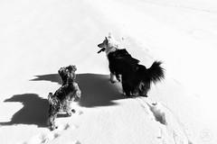 Séta (tarczalieva) Tags: természet tél winter
