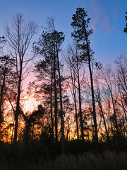 Trees At Sunset. (dccradio) Tags: lumberton nc northcarolina robesoncounty outdoor outdoors outside nature natural sunset evening eveningsky february winter goodevening saturday saturdaynight saturdayevening canon powershot elph 520hs tree trees treebranch treebranches branch branches treelimb treelimbs beauty scenic woods forest wooded settingsun eveningcolors daylightends eveningbegins silhouette