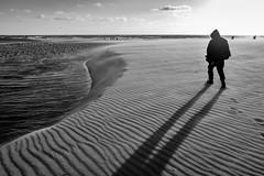Santa Monica Beach (Eduardo Acosta Photography) Tags: ambulantphotographer beach leicaq ocean people sand santamonica seagulls street water pier