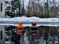 Nice weather for ducks! (055/365) (robjvale) Tags: 365the2019edition 3652019 day55365 24feb19 project365 hereios wah water reflection werehere joy rain enjoy