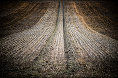 20190309 (Homemade) Tags: field farm earth mud crops winter wantage oxfordshire vivitar70210mmf35series1 southoxfordshire letcomberegis