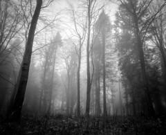 Combe Hill Woods in the fog #2 (Adam Clark Photography) Tags: 2 england yeovil 6x7 bw blackandwhite analog filmphoto film fog forest trees mist atmosphere moody mood tones shootfilm shoot sharp shadow bronica mediumformat